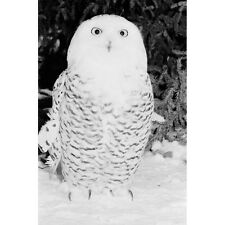 Wildlife Photography 'Snow Owl in Canada' Canvas Print Art