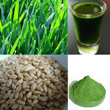 Organic Wheatgrass Wheat Grass Seeds Grain Juicing Sprouting Grinding Cat Grass
