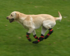 Dog boots for FCE, nerve damage, stroke, dragging paws,  CDRM.  Pro-Active Paws