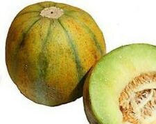 Israel (Ogen) Melon - An extremely juicy melon and is gently sweetened. TASTY!!!