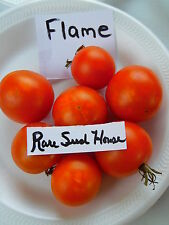 RARE FlammeTomato Seed! 20 SEEDS Comb. S/H  See our Store for Rare Seeds!