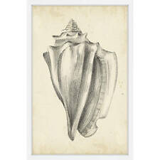 Antique Shell Study IV' Framed Painting Print