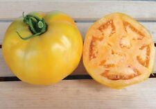 Golden Jubilee Tomato Seeds - Meaty, thick, golden-orange skin! Delicious!