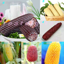 1Pack New Rare Delicious Corn Seeds Vegetables Fruits Seeds