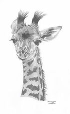 GIRAFFE Ltd Edition art drawing prints  2 sizes A4/A3 & Card Available