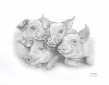 PIGLET CHUMS Limited Edit art drawing print  2 sizes A4/A3 &  cards available