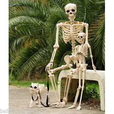 "60"" & 36"" Poseable Life Size Human Skeleton Bones Hungry Hound Dog, Halloween"