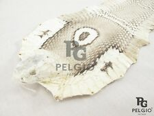 PELGIO Real Genuine Cobra Snake Skin with Head Leather Hide Pelt Natural