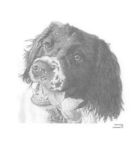 SPRINGER SPANIEL(3) dog L E art drawing prints  2 sizes A4/A3 &  card Available