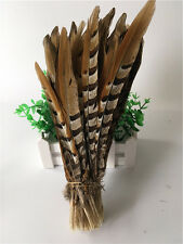 Wholesale 10-100pcs Scarce natural pheasant feather 30-35cm/12-14inch Decorative