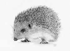 HEDGEHOG Limited Edition art drawing prints 2 sizes A4/A3 & Card Available