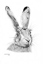 HARE (2)Rabbit Limited Edition art drawing prints 2 sizes A4/A3 & Card Available