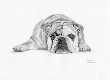 BULLDOG (6) dog Limited Edition art drawing prints in 2 sizes A4/A3 & card avail