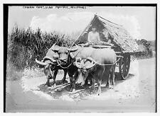 Photo of Carabao Cart, Albay Province, Philippines