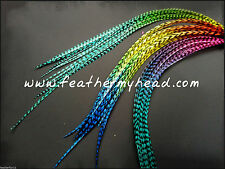 Real  Feather Hair Extensions, Feather Extension Kit Available, Multi COlored