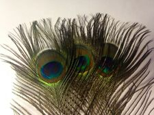 Peacock Eye Feathers Natural 10-12 inches. UK Stock