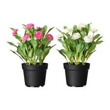 Ikea Artificial Potted Plant Flower Decor Daisy New