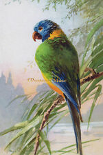 KLEIN PARROT ON A BRANCH Vintage Postcard Image Photo, Blank Card Or Print KL002