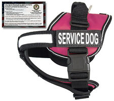 CLEARANCE-Service Dog Harness Vest w/ 50 FREE Service Dog ADA info cards