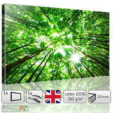 LARGE GREEN TREES FOREST LANDSCAPE CANVAS WALL ART FRAMED PRINTS PICTURES PHOTO