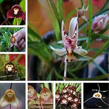 Monkey Face Orchid Flower Seeds Plant Seeds Garden Fun Decor Mixed/Single Types