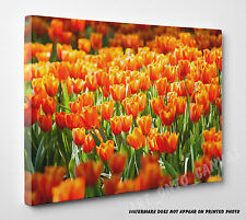 X LARGE Orange Tulips Flower Floral Canvas Picture Print Wall Art A1 A2 A3 A4