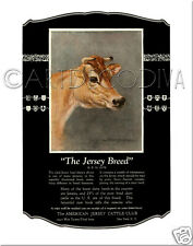 Antique JERSEY COW American Cattle Club ADVERTISING Poster Art Portrait Print