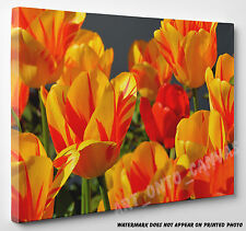 Red and Yellow Tulips Flowers Floral Photo Canvas Print Wall Art Large A1 A2 A3