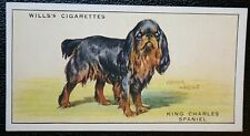 Cavalier King Charles Spaniel        Original Vintage Illustrated Card  VGC
