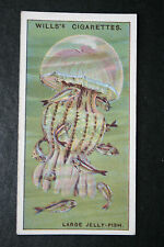 Jelly Fish     Original 1920's Vintage Illustrated Card   VGC
