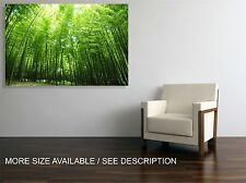 Canvas Print Picture Green Bamboo Forest / Stretched -ready to hang