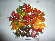 Heirloom Cherry tomato seeds 20 different varieties Certified organic farmer