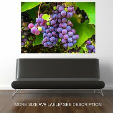 Wall Art Canvas Print Picture Big Purple Grapes Close up  -UNFRAMED