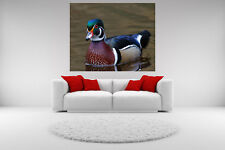 Wood Duck Portrait Canvas Giclee Picture Print Unframed Wall Art Home Decor