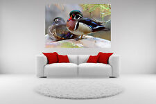 Wood Duck Pair Portrait Canvas Giclee Picture Print Unframed Wall Art Home Decor