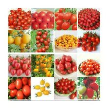 15Styles Various Tomato Potted Plant Seeds Vegetable 1 Bag 20 Seeds