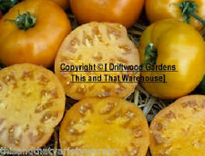 Yellow Jubilee Tomato Vegetable Seeds! Heirloom! Fast Shipping From USA! Non GMO