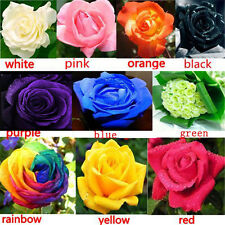 100Pcs Multi-color Flower Plant Seeds Holland Rose Seeds Lover Gift Garden Court