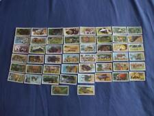 BROOKE BOND TEA CARDS:AFRICAN WILD LIFE:BLUE BACK:BUY INDIVIDUALLY NO's 1 - 50