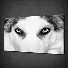 BLUE EYES OF THE WOLF ANIMAL MODERN CANVAS WALL ART PRINT PICTURE READY TO HANG