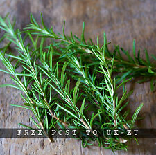 Whole Fresh Rosemary 50 Springs Organic Fresh Cut to Order Cooking