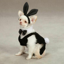Casual Canine PARTY HOUND Playboy BUNNY Dog Halloween Costume