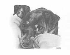 MINIATURE PINSCHER dog LE art drawing print 2 sizes A4/A3 &  card available