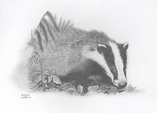 BADGER Limited Edit art drawing prints 2 sizes A4/A3 & cards available