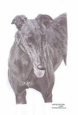 GREYHOUND (8) dog LE art drawing prints  2 sizes A4/A3 &  Card Available