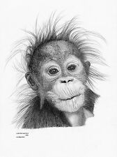 ORANGUTAN Limited Edition art drawing prints in 2 sizes A4/A3 & card available