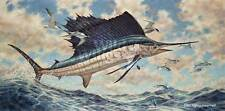 Don Ray Airborne - Sailfish