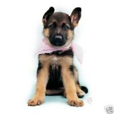 German Sheperd Pup with Scarf    Tshirt    Sizes/Colors