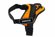 DT FUN Orange Working Dog Harness with Fun Velcro Patches GANGSTER
