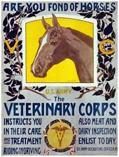 8013.Veterinary corps.US army.recuitment.picture of horse.POSTER.art wall decor